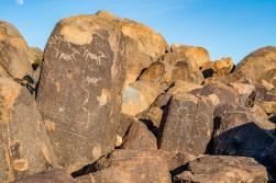 Animal petroglyphs