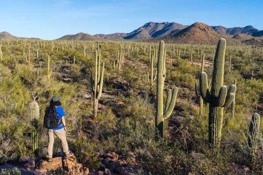 Cactus galore